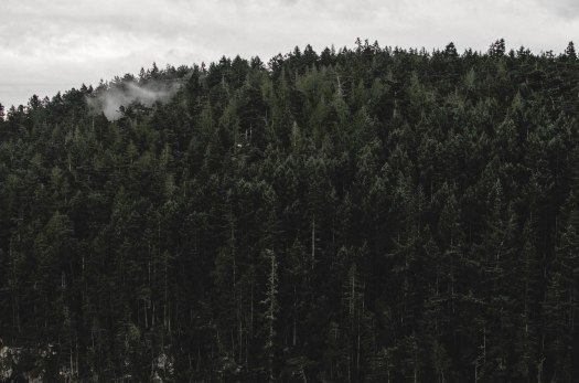 evergreens, fog over trees, pacific northwest @livingless.wordpress.com