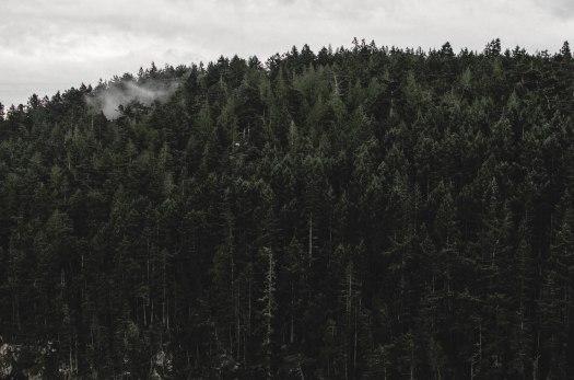 evergreens, fog over trees, pacific northwest @livingless.wordpress.com
