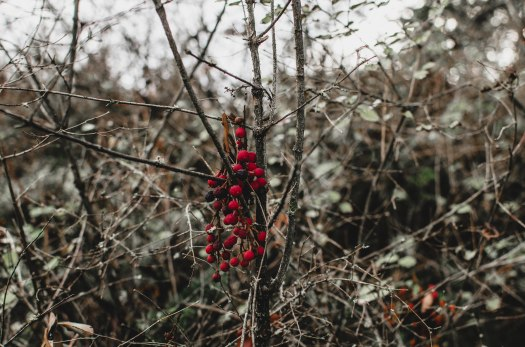 nature, red berries, woods @livingless.wordpress.com