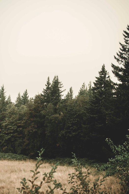 open field, pacific northwest, evergreens @livingless.wordpress.com